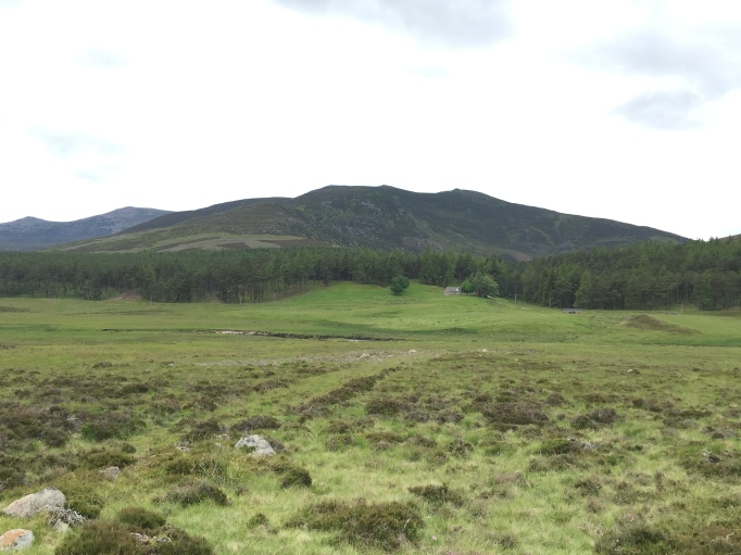 Conachcraig from the Glen Muick road.  Not the heathery lump it assumes  to be.