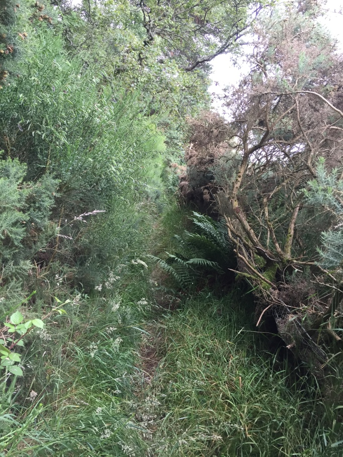 Bit overgrown...