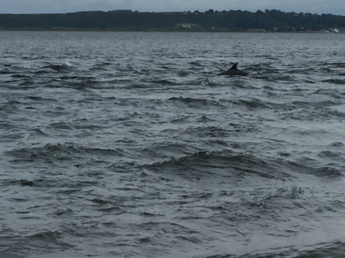 Spot the dolphin!